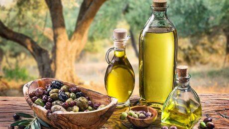 В РУз планируют выращивать оливковые плантации