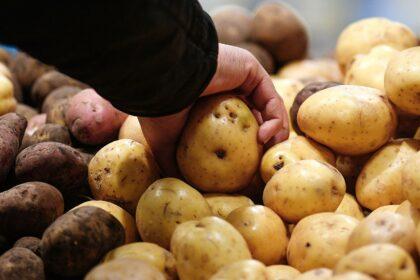 Узбекистан: цена на картофель выросла на 17%