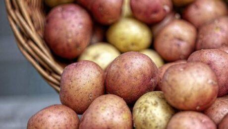 В Узбекистане за неделю картофель подорожал на 43%